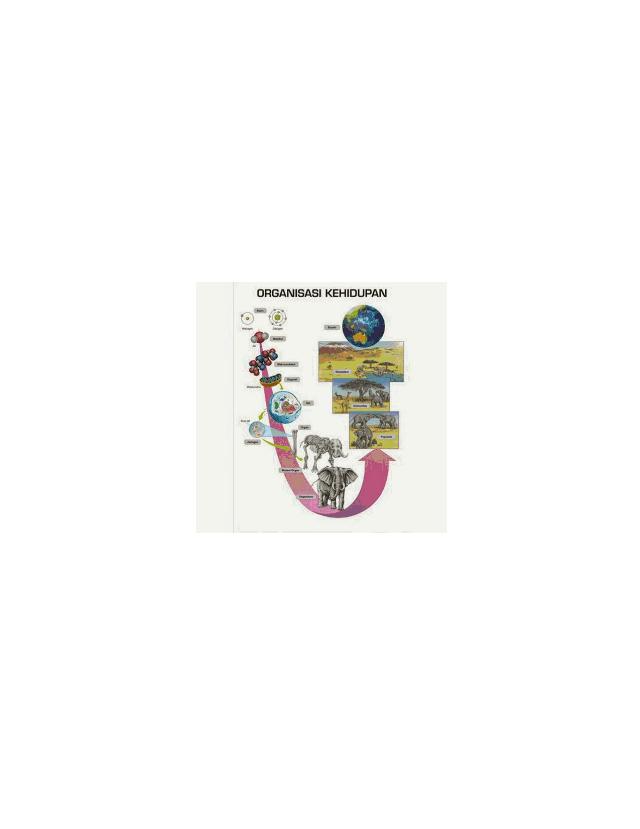 Histologi merupakan ilmu tentang susunan dan juga fungsi jaringan tubuh makhluk hidup. INDIKATOR_KONSEP_BIOLOGI.docx - INDIKATOR 1 OBJEK KAJIAN