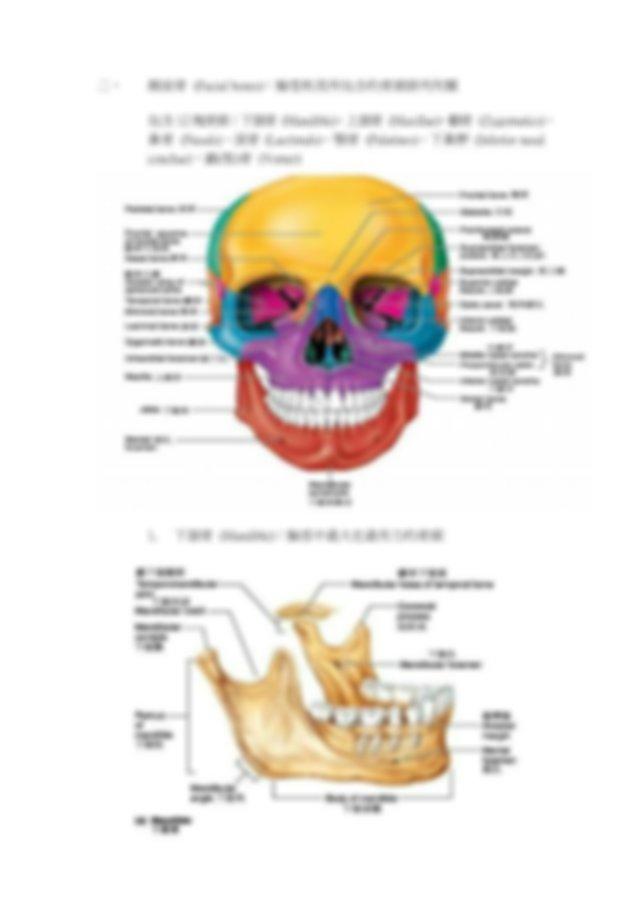 第 7 對腦神經顏面神經 第 8 對腦神經聽神經 第 9 對腦神經舌咽神經 第 10 對腦神經 走神經 第 11 對腦神經腹 ...