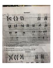 Karyotype Worksheet