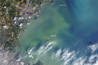The Moderate Resolution Imaging Spectroradiometer (MODIS) on NASA's Aqua satellite captured this view of an algae bloom in the west end of Lake Erie. The image of the coastal waters off of Ohio, Michigan, and southwestern Ontario was acquired at 2:50 p.m. EST on August 3, 2014. Algae generally gives the water a milky green color in MODIS natural-color images.