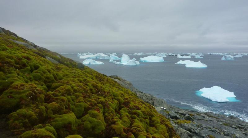 moss on Antarctica