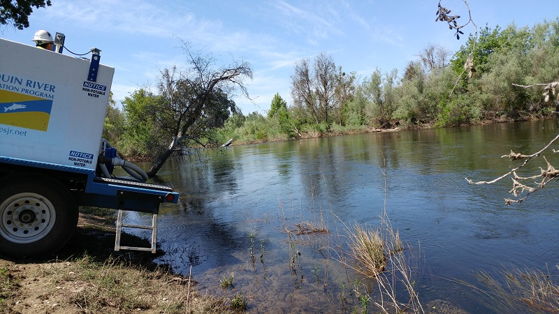 Chinook Salmon Flocking to Revitalized San Joaquin River