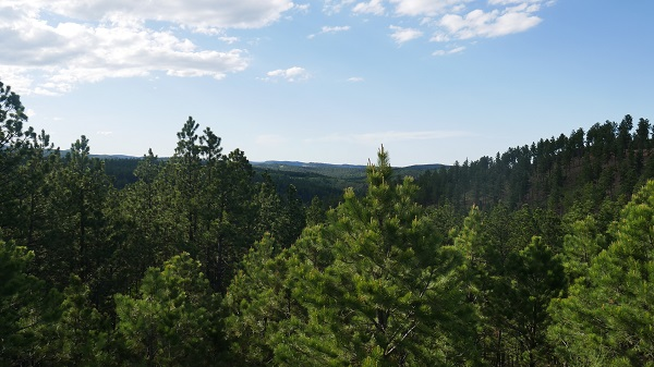 The Black Hills of South Dakota. (Photo by Chris Marshall/CNS)
