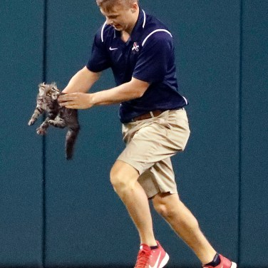 A member of the Busch Stadium grounds crew removes a cat that had run onto the field during the sixth inning of a baseball game between the St. Louis Cardinals and the Kansas City Royals on Aug. 9, 2017, in St. Louis. (AP Photo/Jeff Roberson)