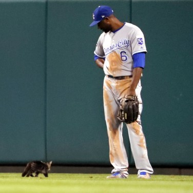 Kansas City Royals center fielder Lorenzo Cain watches as a cat runs past during the sixth inning of the team's baseball game against the St. Louis Cardinals on Aug. 9, 2017, in St. Louis. (AP Photo/Jeff Roberson)
