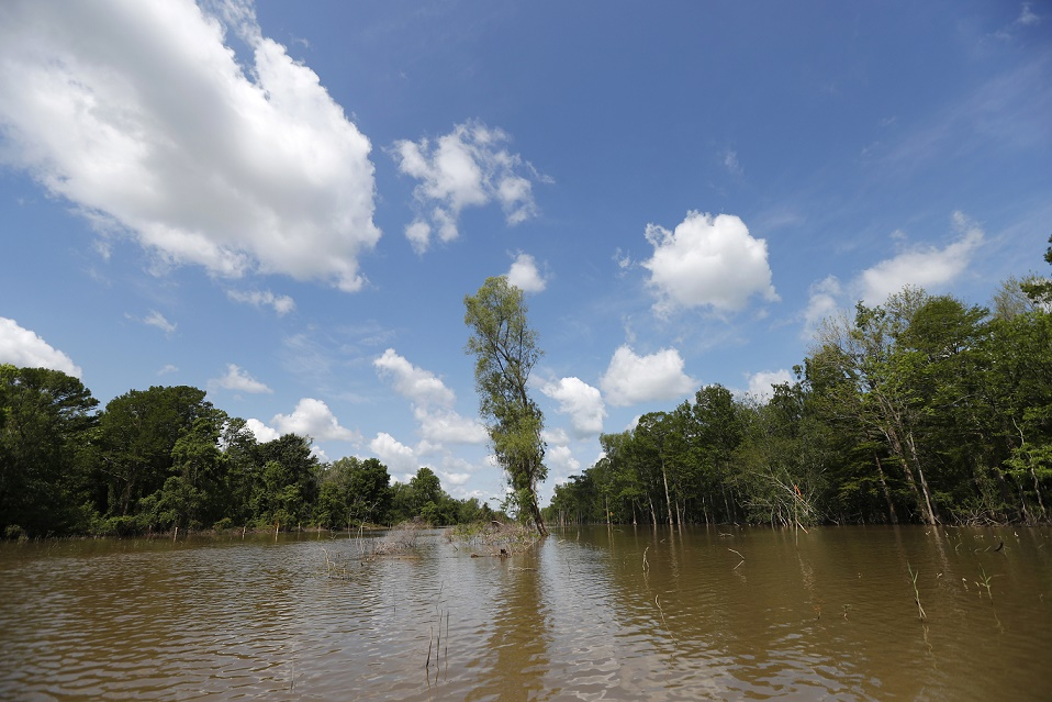 Fifth Circuit Gives OK to Louisiana Pipeline