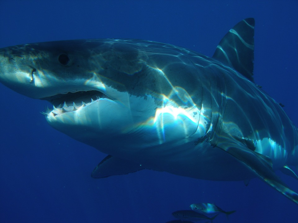 Suppliers Challenge Texas Law Targeting Shark Sales