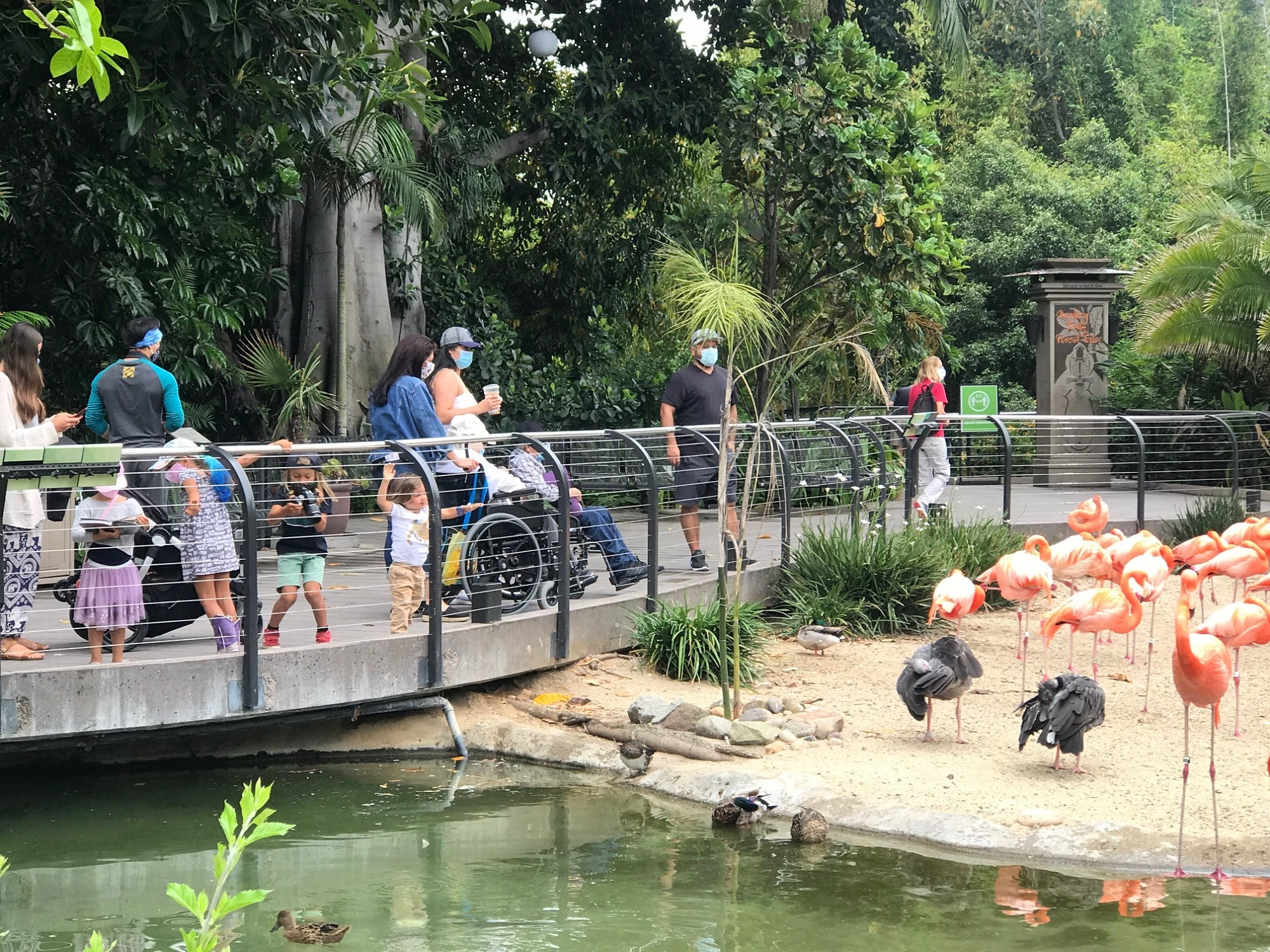 San Diego Zoo Christmas 2020 San Diego Zoo Reopens as Sanctuary for Cooped Up Families