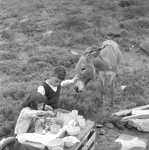 Overnight mule-assisted family camping trip outside Ensenada, Baja California, circa 1959. The family never reached the coast and after a night in a valley that sounded like it was infested with rattlesnakes, the family returned to Ensenada.