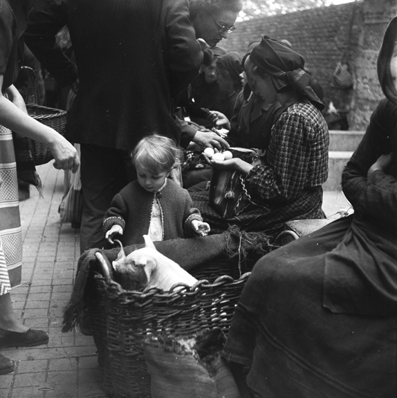 Getting to know a piglet at the market. From Walt Girdner's Europe collection.