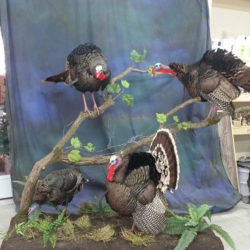 Mehlhop Four Season Taxidermy (177)
