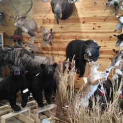 Mehlhop Four Season Taxidermy (41)