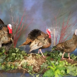 Mehlhop Four Season Taxidermy (79)