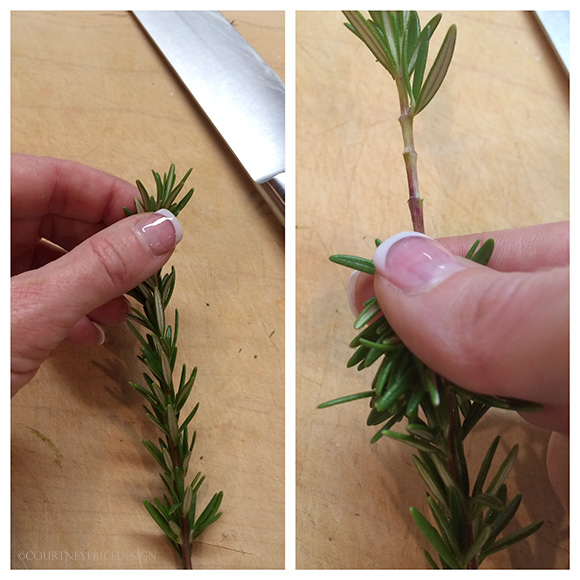 rosemary, How to make herb butter on www.CourtneyPrice.com