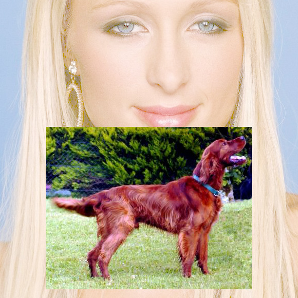 Paris Hilton Dog,Color Of The Year- Marsala on www.CourtneyPrice.com