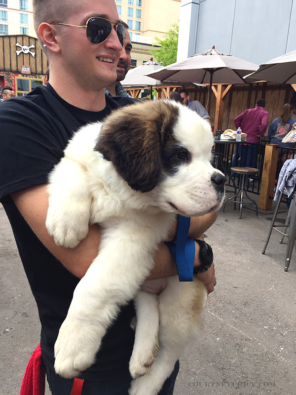 st-bernard-rescue, sxsw, branding, best in branding, mophie lodge, stay powerful, cutest puppy, branding partnerships, puppy spa day, mophie rescue,big puppy, puppy rescue, puppy branding, fluffy puppy, puppies, st bernard puppies, branding awards, mobile rechargers, backup batteries
