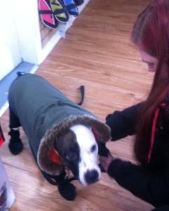 Corps & tete du chien ave manteau d'hiver