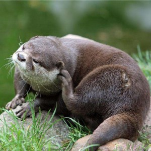 Siberian Mink Fur