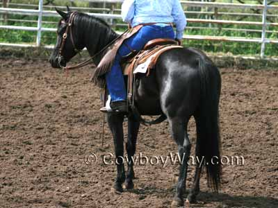Recognizing Horse Colors  With Pictures Blue Roan  A blue roan horse