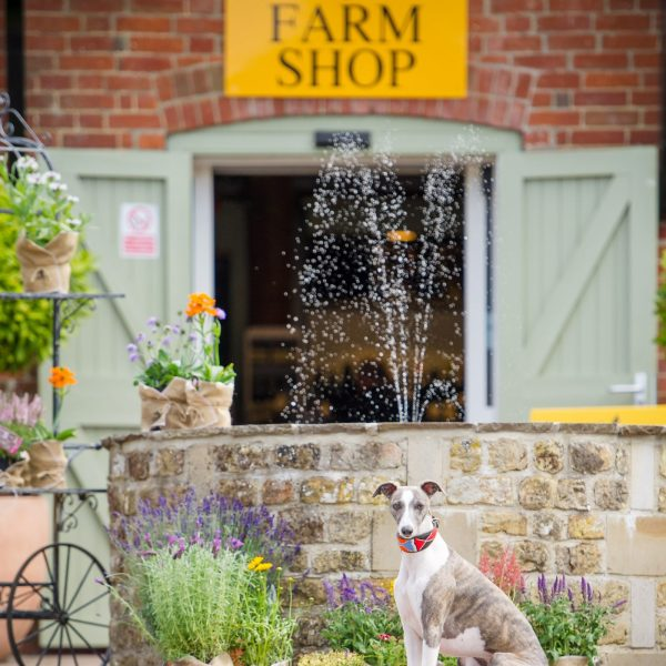 Cowdray Farm Shop & Cafe Square