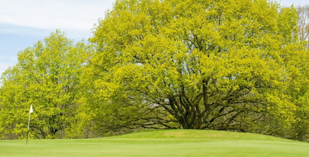 Golf May 16