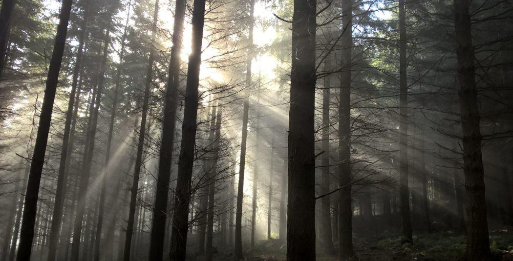 Sun in Trees Verdley Rupert Hill