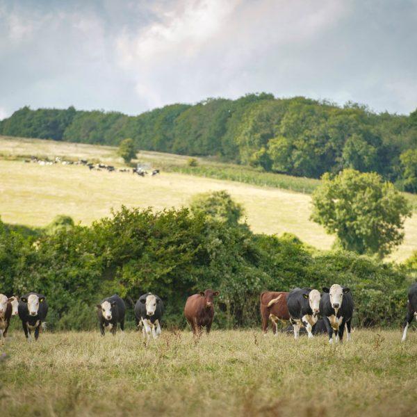Cowdray farms