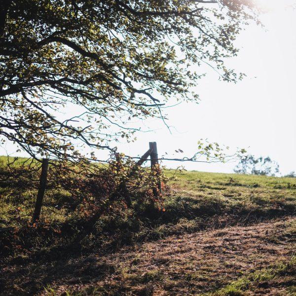 A walk around Cowdray's veteran trees