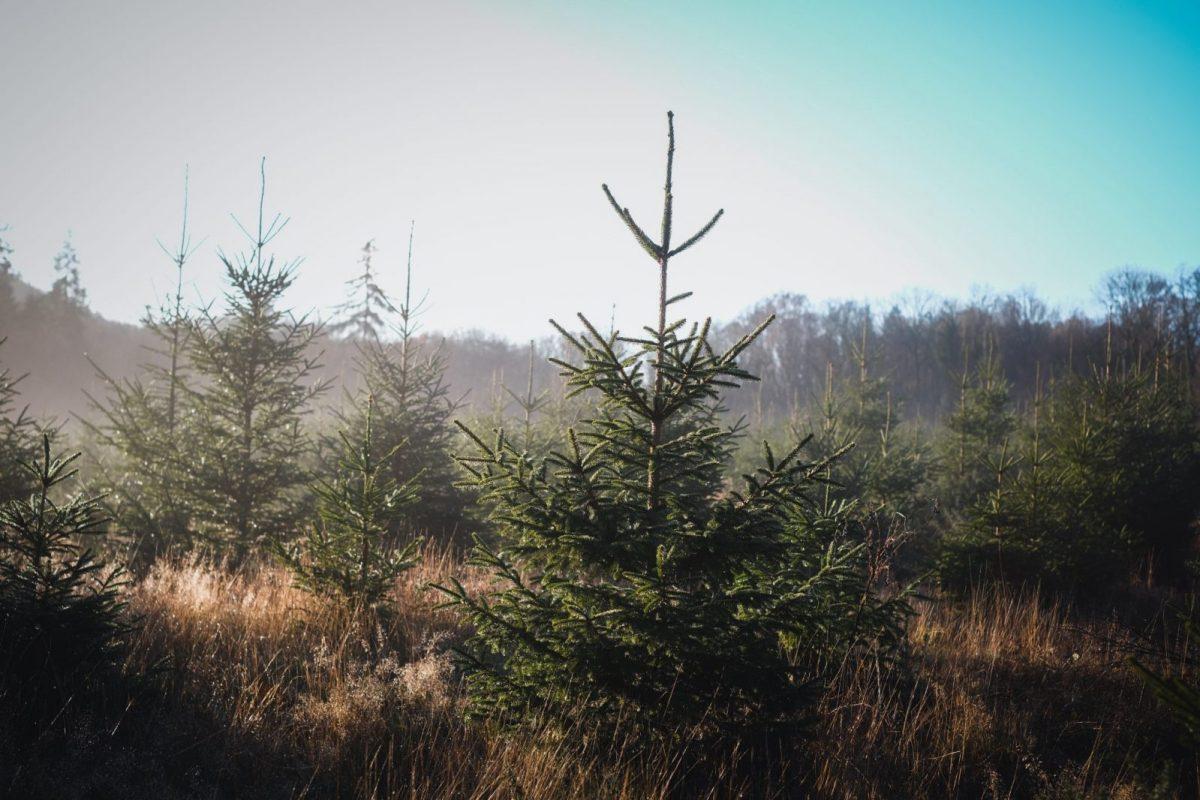 Sustainable Woodland