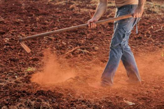 farmer working in soil helpful tips for growing fruit and vegetables in and around your home