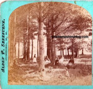 Stereo-graph view of Birch-dale Springs in Concord NH. The nearby grove was a popular spot for picnickers.