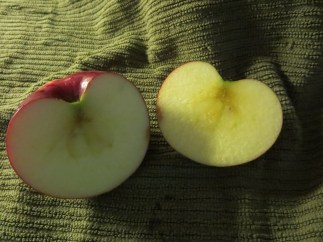 A Jona-Red Apple, cut open showing inside. Photograph by Janice W. Brown, Blog: Cow Hamphire