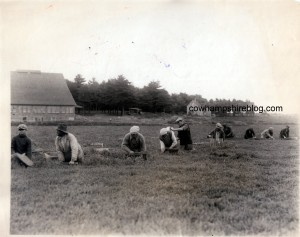Photograph of 1924 workers at the cranberry farm of W.L. Urann. Photograph property of Janice Brown.