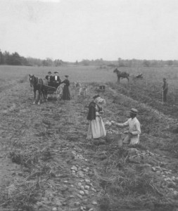 """Photograph courtesy of the UC Riverside California Museum of Photography, """"Measuring Potatoes in Field. Reeds Ferry, N.H., Gifford M. Mast, Keystone-Mast Collection, date unknown"""