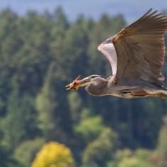 B. Hetschkko Heron photo