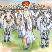 Milk and Draugh breed of Indian cows.