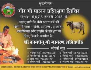 Gir Cow Training