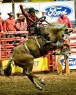 Red Steagall Bronc Rider