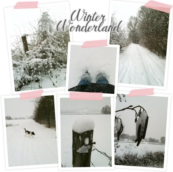 Die wunderschöne eingeschneite Winterlandschaft bewundert und fotografiert.