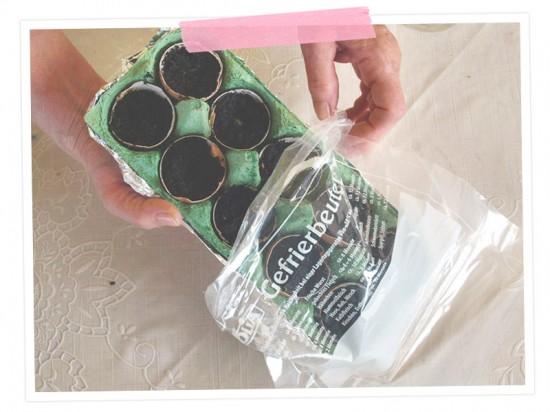 Nun kommt der Gefrierbeutel zum Einsatz. Wir stülpen ihn über die Pappe und verschließen ihn  gut mit einer Wäscheklammer oder einem Gummiband.