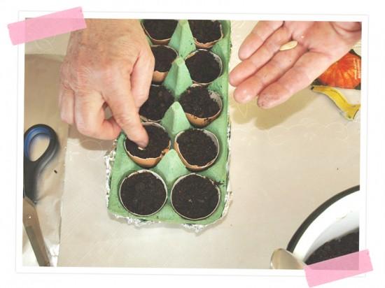 saNun legen wir die Saat in die Eierschalen und bedecken sie mit etwas Erde und drücken sie vorsichtig an.