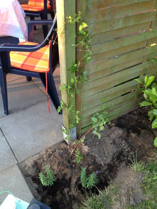 Wir haben eine Flechtplatte als Sichtschutz gesetzt und eine Clematis gepflanzt