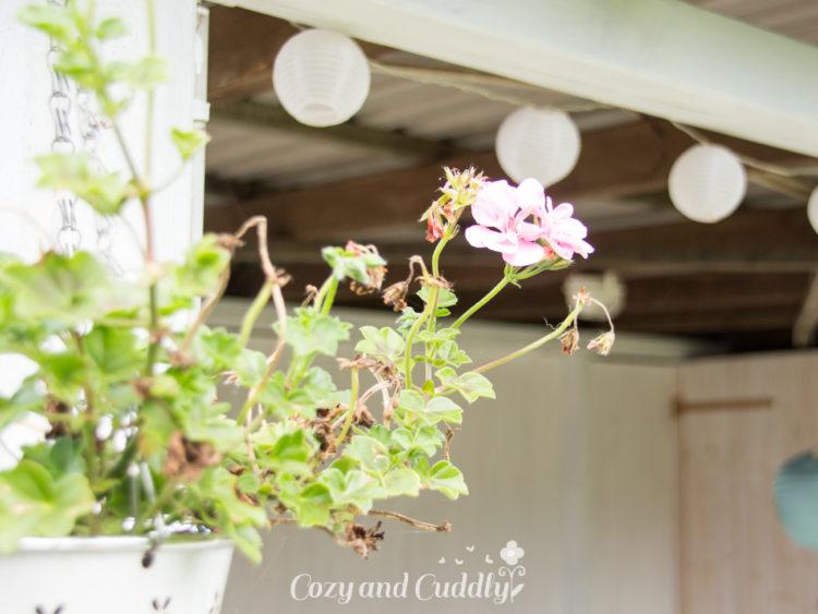 Gartentraum in Shabby - Inspirationen für den kleinen Garten. Kostengünstig und mit wenig Aufwand den Garten verschönern