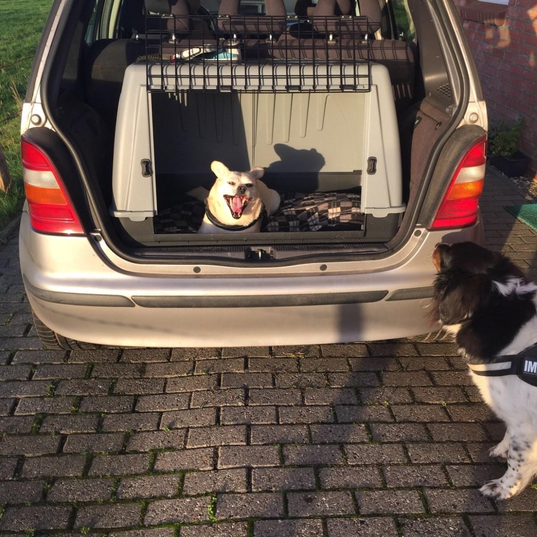 Nach dem Mittag versucht den Hund dazu zu überreden ins Auto zu springen.