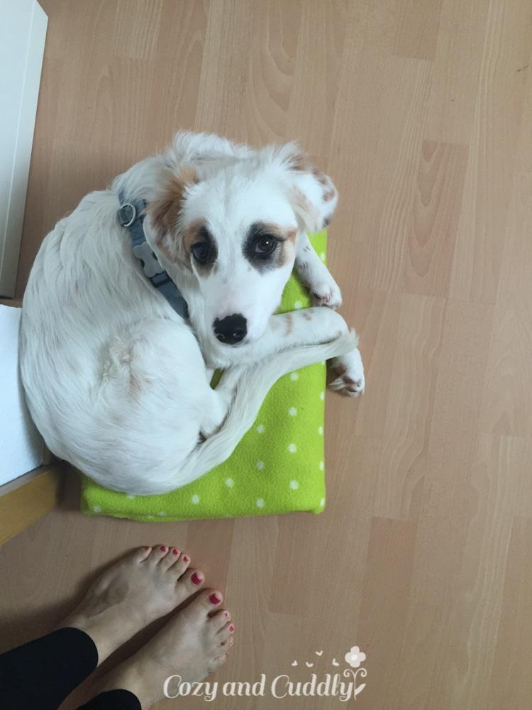 Frauchen warum hast Du meine Decke so klein gemacht? Da passe ich doch gar nicht drauf !