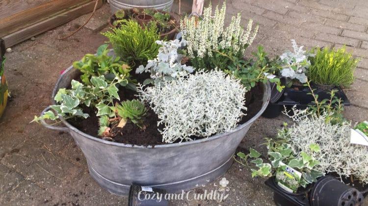 Nach Feierabend meine neue alte Zinkwanne bepflanzt