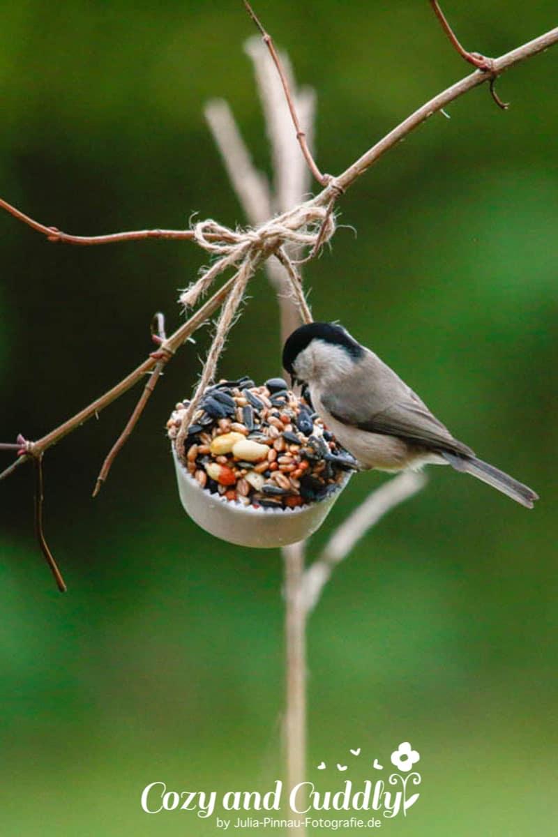 Vogelfutter Muffins Fur Die Vogel Im Winter Vogelfutter Selber