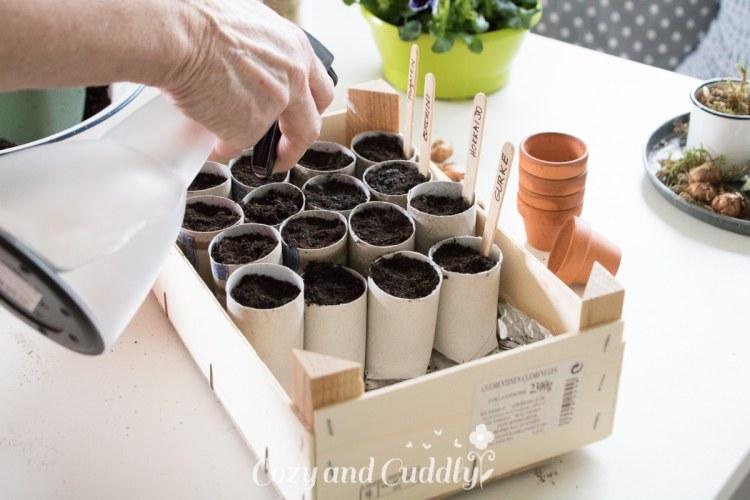 Gemüsegarten: Anzucht in Klopapierrollen - Saat vorziehen - ohne pikieren- Wir starten ins neue Gartenjahr - Anzuchttöpfchen aus Klopapierrollen - Aussaat-Tipps