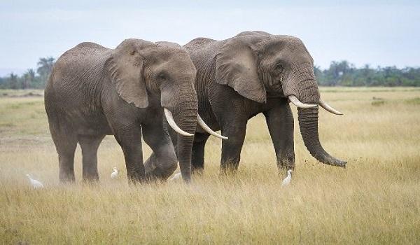cpa13 elephants
