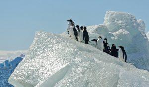 penguins walking up ice berg slope